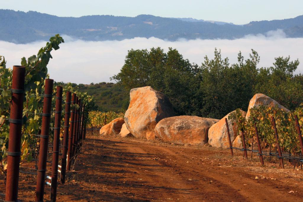 Continuum Estate, Winery, Wijngaard, Vineyard, druiven, grapes, Tim & Marcia Mondavi, Napa Valley, Sage Mountain, Photo of Continuum Estate