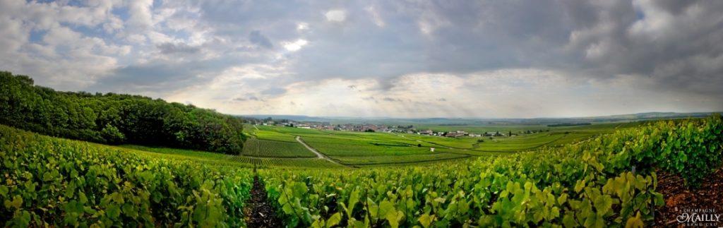 Mailly Grand Cru Champagne, frankrijk, wijngaarden