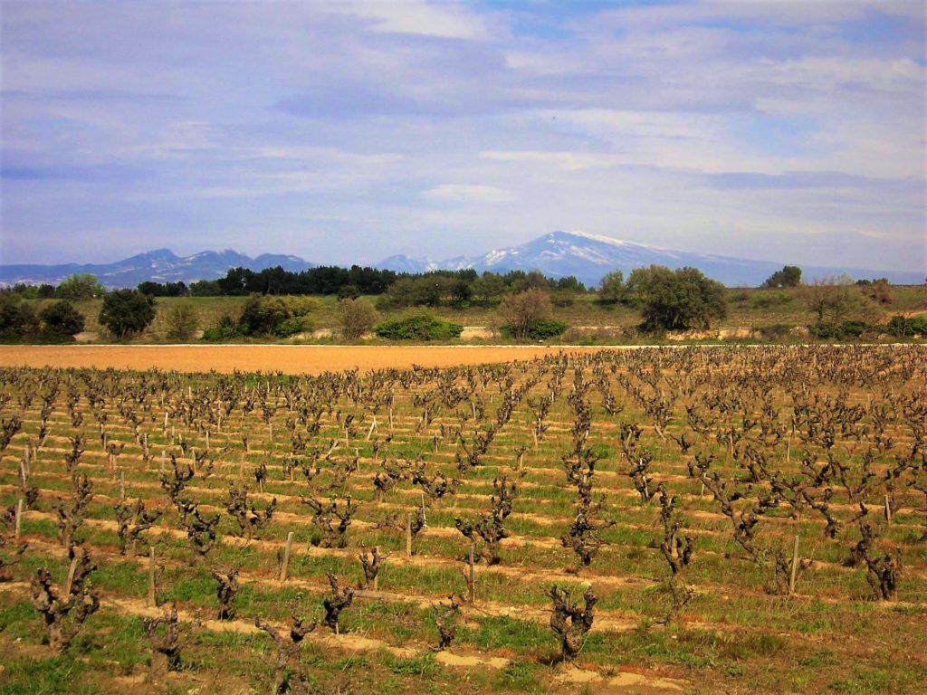 Chateau Mourre du Tendre, Chateauneuf du pape, wijnstreek, foto wijngaarden