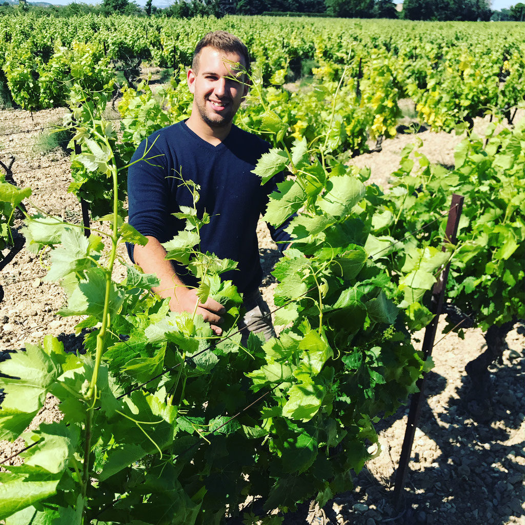 Paul Verité in the vineyards, Chateau Mourre du Tendre